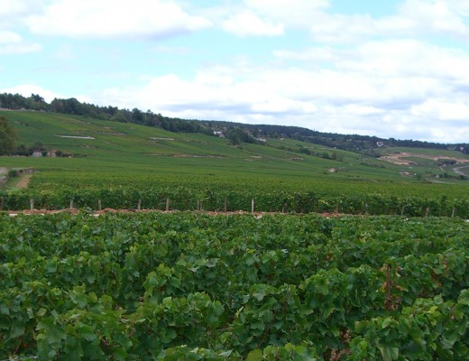 Beaune vineyard