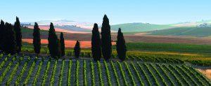 vinos_jerez_sherry_wines_vinas_con_cipreses
