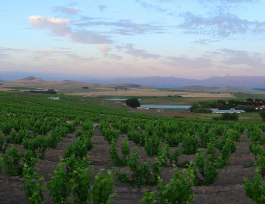 Swartland vineyards