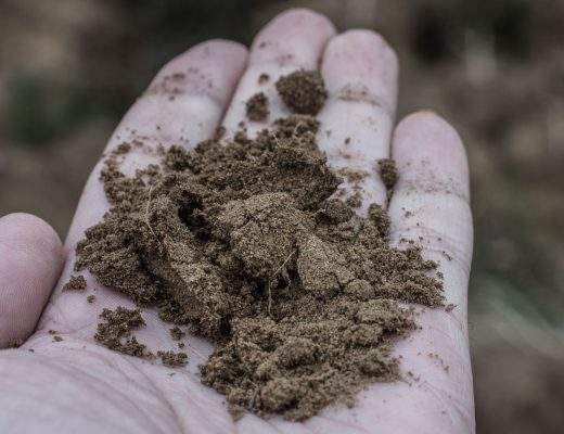 Châteauneuf du Pape vineyard soil