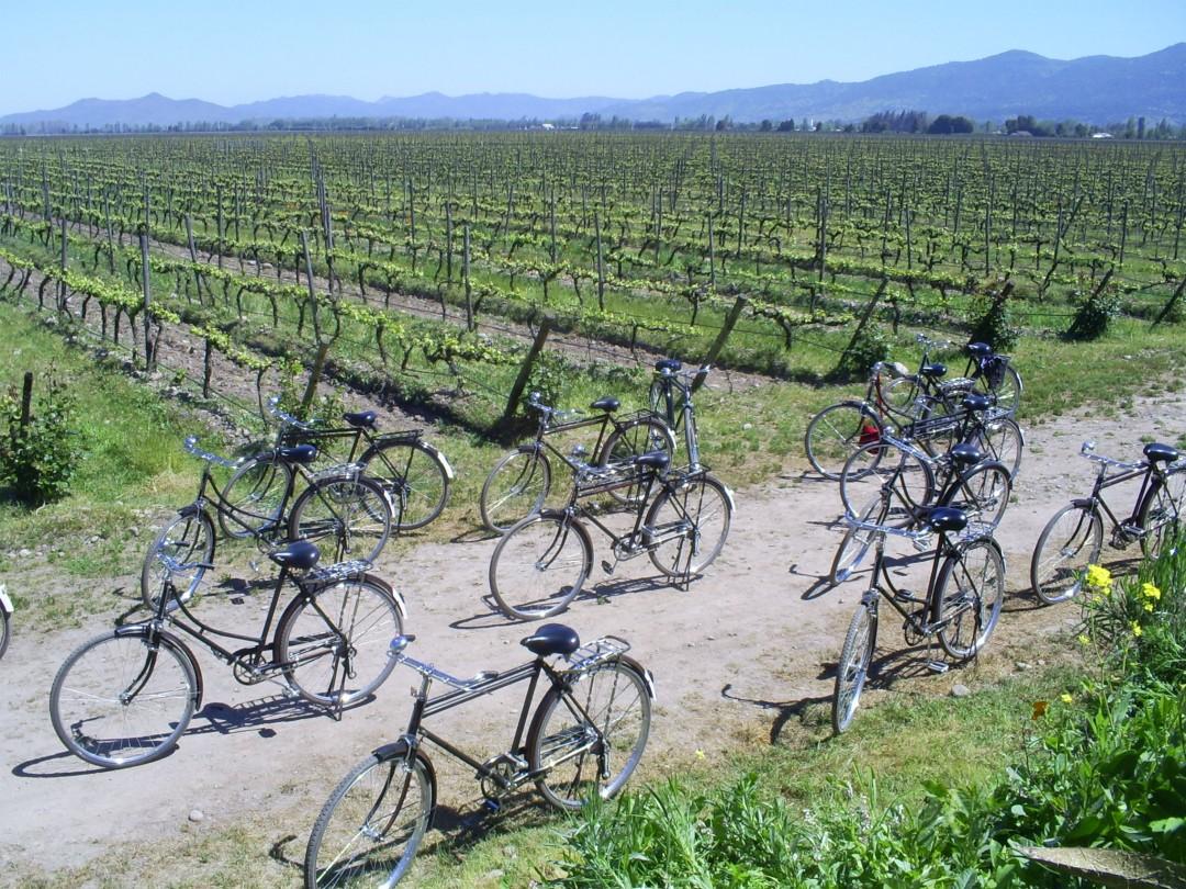 Cono Sur Winery Bicycles