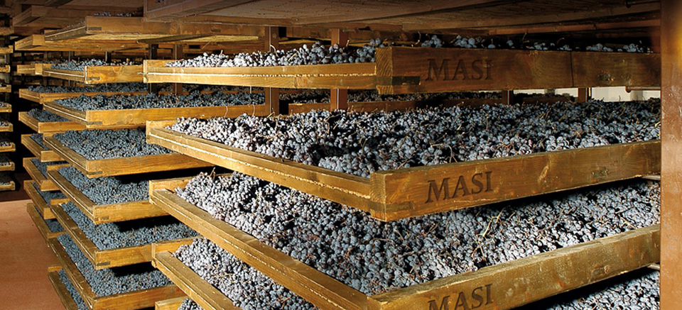 Masi winery valpolicella