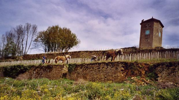 Benedicte Stephane Tissot Jura Wine Chardonnay Savagnin Blanc