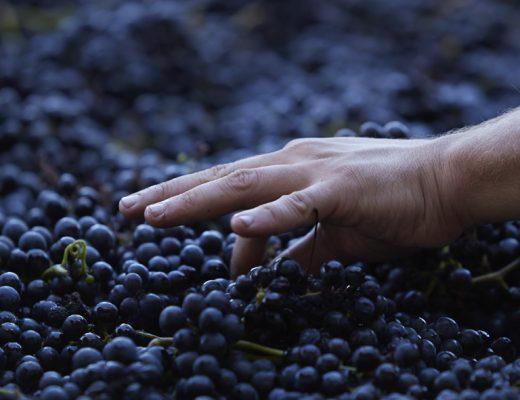 Domaine Queylus Niagara Wine