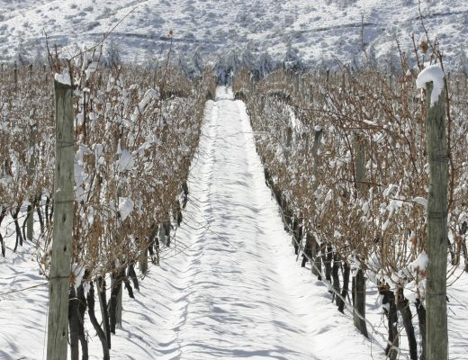 big, bold red wine winter fresh balanced