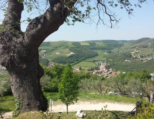 overview of italian wines