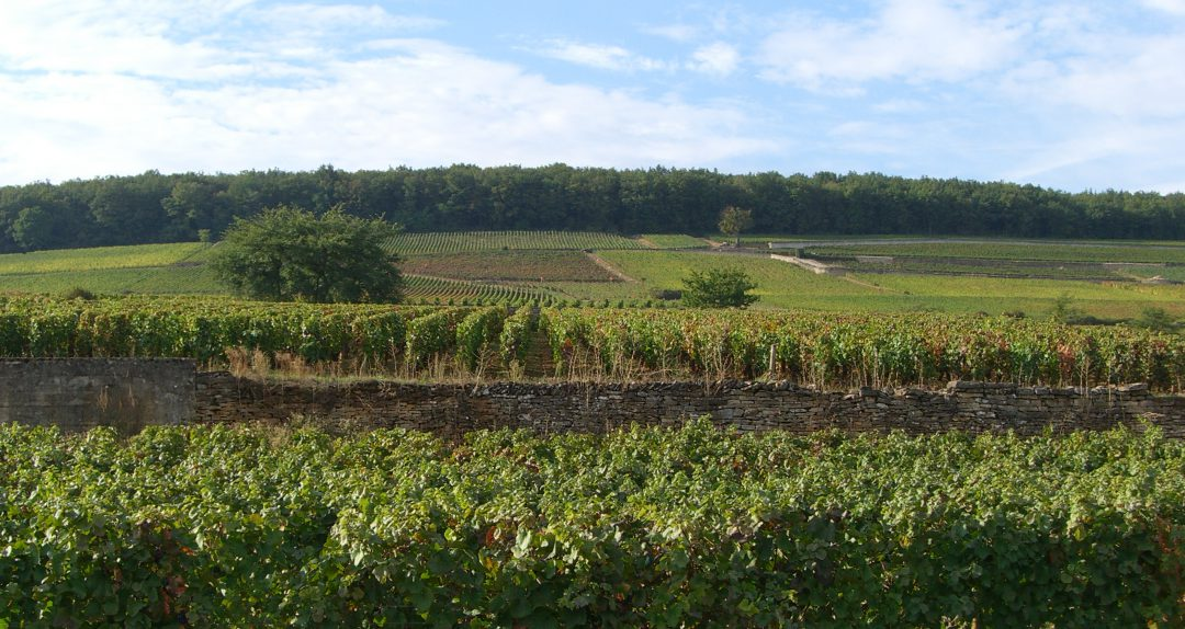 what makes pinot noir special