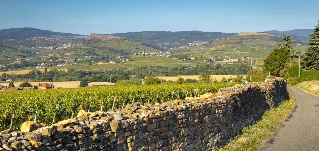 regional appellations of burgundy