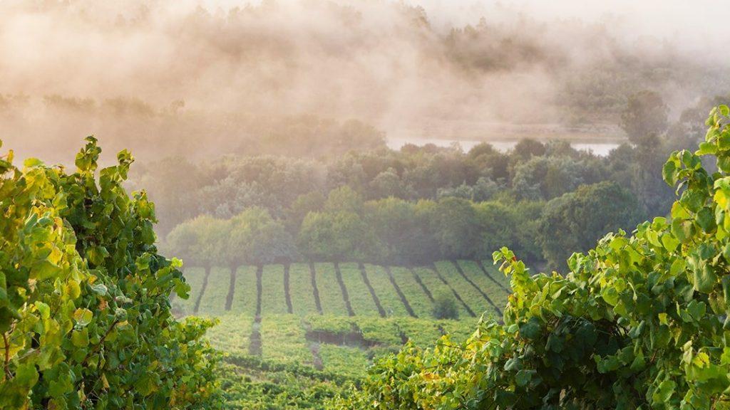 Rías Baixas vineyards Condado do Tea