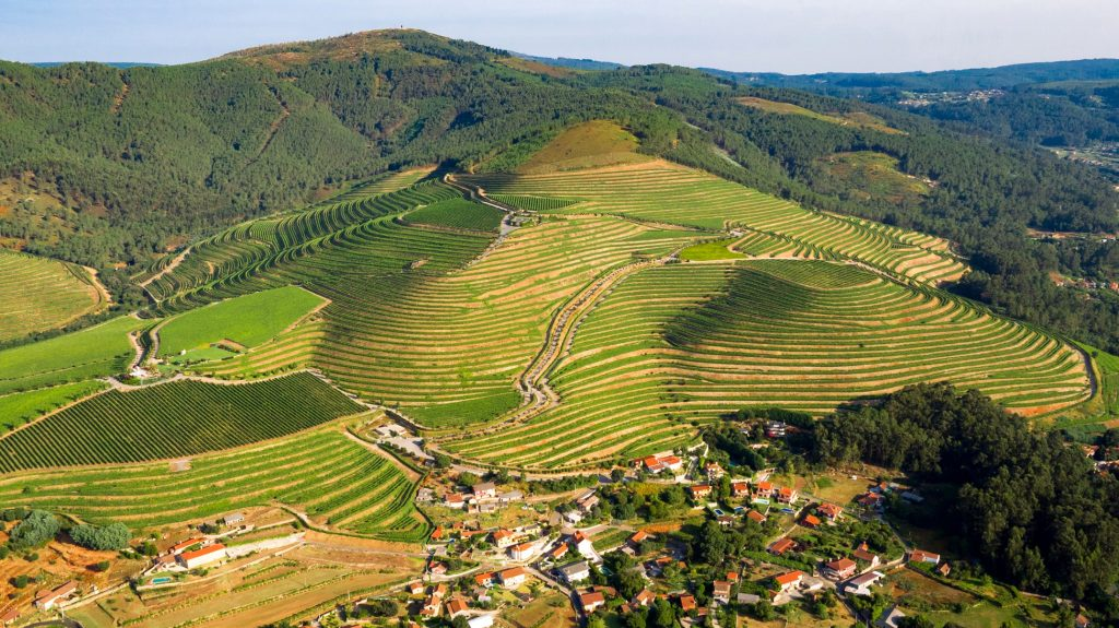 Rías Baixas vineyards O Rosal