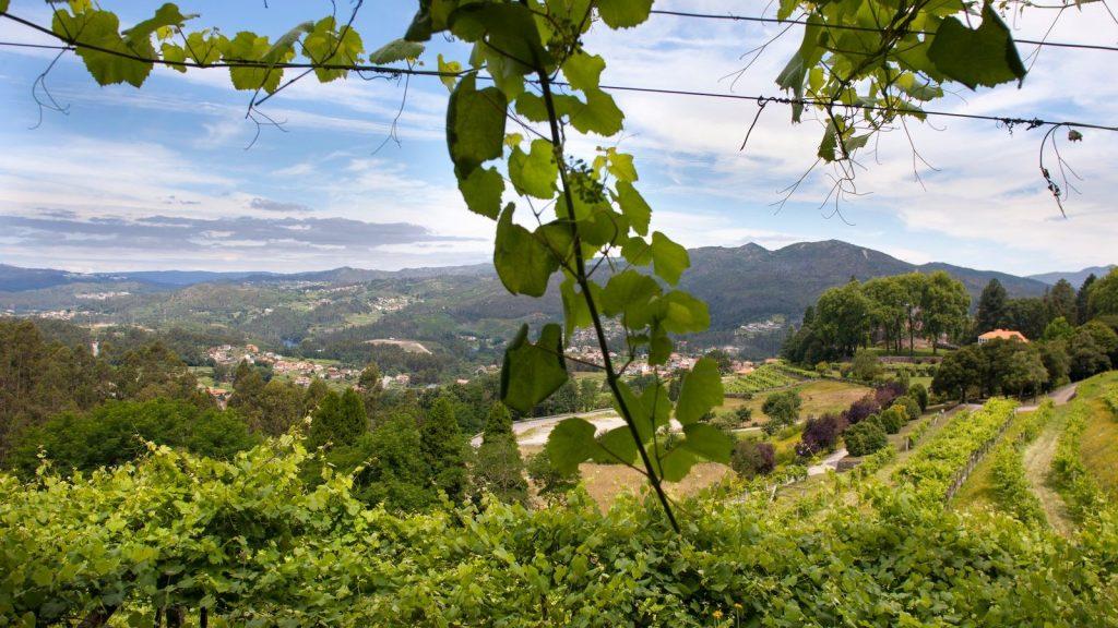 Rías Baixas vineyards Soutomaior