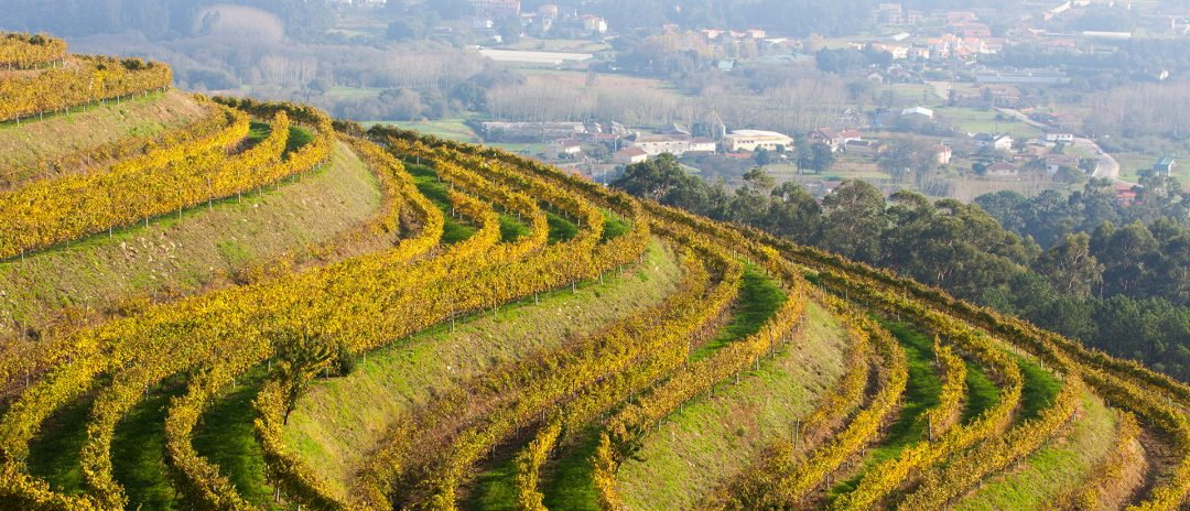 Rías Baixas vineyards