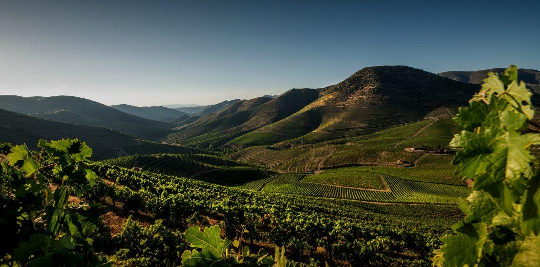 wines of Casa Ferreirinha
