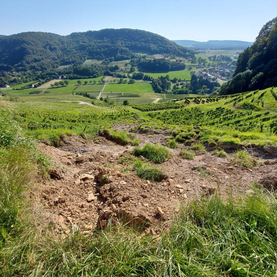 2021 French Wine Harvest